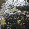 冬到来、福井市内は初雪だったよ