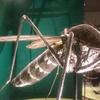 国立科学博物館の特別展と企画展