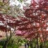 桜見ながら・・・選択肢多いよ。シニアは。