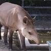 2018/08/18 京都市動物園