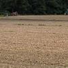 玉ねぎの収穫中