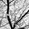 2020年3月28日までに撮影したデジカメ写真。シモクレンとレンギョウとソメイヨシノがシーズンです