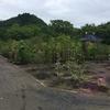 日本ライン花木センターに行って 木を購入しました。