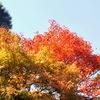 大河内山荘の紅葉を見に行く②観光14R...過去20181111京都