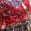 【親子登山】Vol.06_大山(神奈川)/紅葉と富士山とココア