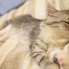 スマートウオッチ(ガーミン)で睡眠状況のパターンをみつけよう