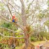 オーストラリアの田舎の子供って普段なにして遊んでるの?