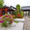 京都・洛中 - ツツジ彩る天寧寺