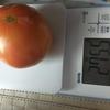 8月の野菜 ダイソーの大玉トマト収穫開始