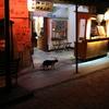 台北年末年始!女子グルメ旅行記14~シーザーパークホテル、猫に会いに猫村へ