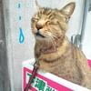 予告!平成ジャンプした猫のお話し!