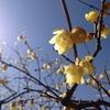 宝登山〜春近し〜