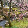 金沢・兼六園で梅、越山甘清堂 CAFE 甘で加賀棒茶ときなこのパフェを楽しんできた【2019.3.10】