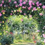 DIY【庭改造計画】雑草だらけの庭をバイク用ガレージに改造|業者よりも安く簡単に