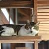 猫専用共生型アパートに引っ越して猫と生活し家賃を半分プレゼント。福岡の猫カフェが新しい試み