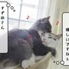 猫雑記 ~むくの変化~
