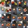 中玉トマト収穫終了