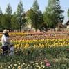 春になったよ!  ゴールデンウイークにおすすめ!   0歳〜2歳までの子ども外遊びにぴったり!  滋賀ブルーメの丘!