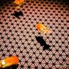 【すみだ水族館】都会好きの札幌市民が四六時中心地良かった首都圏1人旅 part8