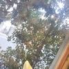 【食】緑あふれるカフェ ボスケ@大宮