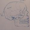 イライラ ポカーンの原因は頭蓋骨にあった?