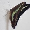 蛹から蝶になりました。