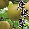 新しい仲間の歓迎昼食会 (永源寺 八風の湯)  2017.8.23