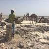 【エチオピア】アサレ塩湖 塩の採掘場
