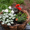 4月25日 今日の庭