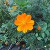 オレンジ色☆
