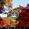 【観光】紅葉の綺麗さNo.1な永観堂に行ってきました。