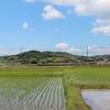 梅雨の晴れ間。入母屋造りのお家in田んぼ・・・