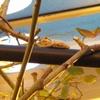 うちの庭(川越市)にいる小さな生き物たち