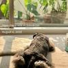 【いろいろ違う】犬と猫②