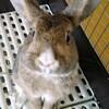 素人でも撮れたよ!ウサギ写真の撮り方