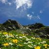 南アルプス白根三山縦走、お花畑がお出迎え!
