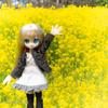 菜の花ライド!春の南信州の山岳ライドは気持ちよすぎ(*'▽')