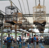 Kontes Burung Kicau Pemda Ogan Hilir Diminati Banyak Orang