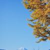 富士山の好展望、百蔵山から扇山を縦走