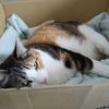 【愛猫日記】毎日アンヌさん#250