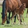 【ダイワメジャー】種牡馬の特徴 牝馬優勢の芝血統でスピード○