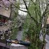 桜シーズンの京都に行ってきました。混雑がすごい!