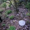20214月上旬の庭