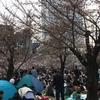 錦糸公園 櫻まつり 2017年 (7)