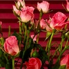 婚活。お見合い後の初デートでは花を1輪、差し上げましょう