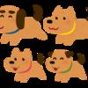 犬の発情・繁殖や不妊・去勢手術について