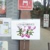 六義園の桜情報 と 六義園公園の 桜
