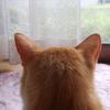 猫ちゃんずの後ろ頭比べ