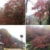 愛車VOXYで紅葉を見に吉野へ