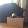 とある黒猫の一日。